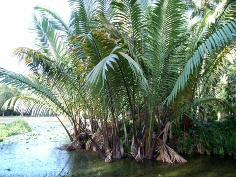 Image Result For Palm Plants That